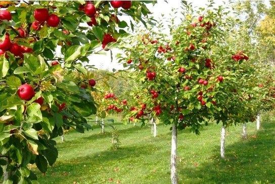 Ovocné stromy a kríky