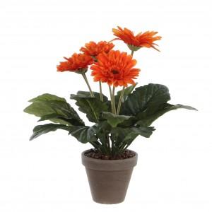 Gerbera oranžová v kvetináči 34123