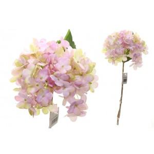 Hortenzia ružovo-žltá 1ks  31477