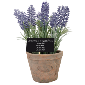 Levanduľa v terakotovom kvetináči s tabuľkou s názvom bylinky v latinčine Esschert Design 35051