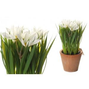 Margarétky v bielej farbe v kvetináči 34705