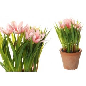 Margarétky vo svetloružovej farbe v kvetináči 34706