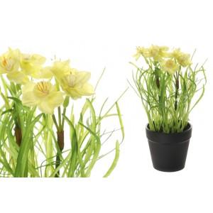 Narcis v žltej farbe v kvetináči 34708