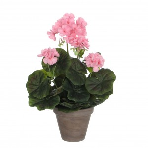 Pelargónia - muškát ružová v kvetináči 34116