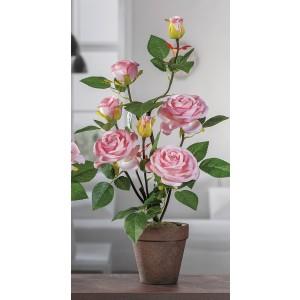 Ruža v štyroch rôznych farbách v hnedom kvetináči 60 cm 32899