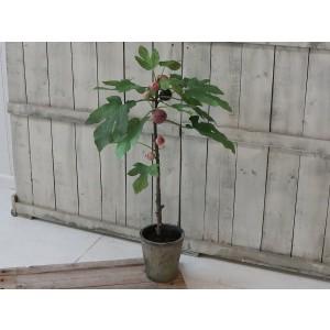 Umelý strom - figovník s plodmi v keramickom kvetináči výška 76 cm Chic Antique 33746