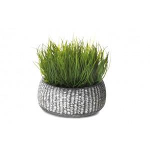 Zelená okrasná tráva v kvetináči 34712