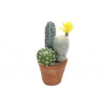 Sukulent v kvetináči 20cm 30024
