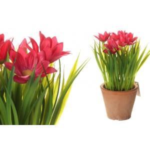 Margarétky v ružovej farbe v kvetináči 34707