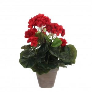 Pelargónia - muškát červený v kvetináči 34098