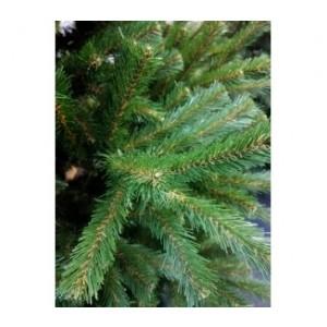 Vianočný stromček smrek Natura 2,20 m 32467