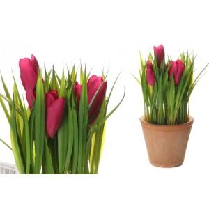 Tulipán v ružovej farbe v kvetináči 34704