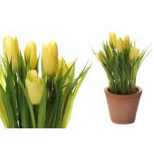 Tulipán v žltej farbe v kvetináči 34703